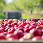 Новое приложение поможет фермерам бороться с паразитами и болезнями растений