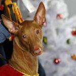 """Южнокорейская компания разработала """"умный"""" ошейник, способный определять эмоции собак"""